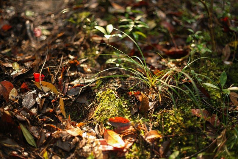 Der Tau und die Blätter sind auf ther Boden lizenzfreie stockfotos