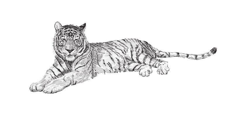 Der Tiger liegt, Skizzenvektorgrafik-Schwarzweiss-Zeichnung vektor abbildung