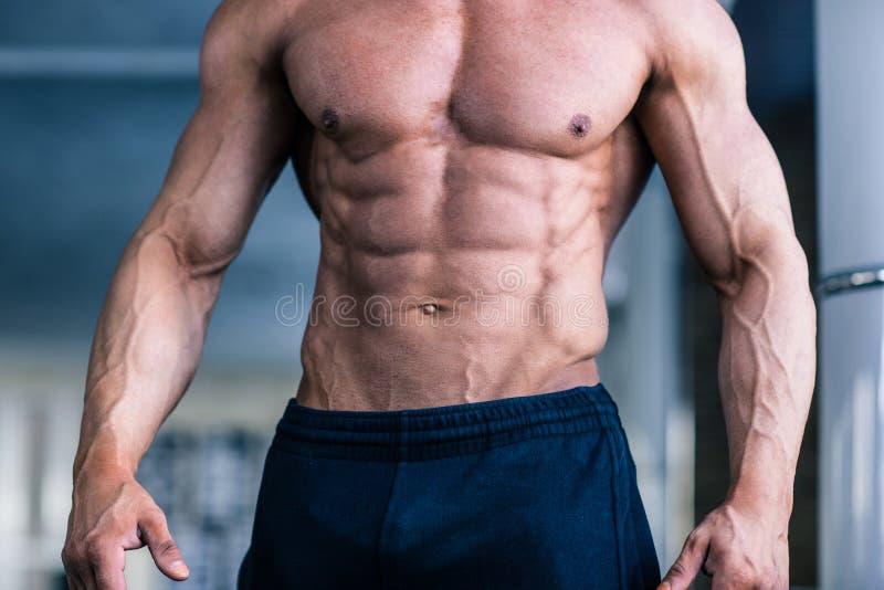 Der Torso des muskulösen Mannes lizenzfreie stockfotos