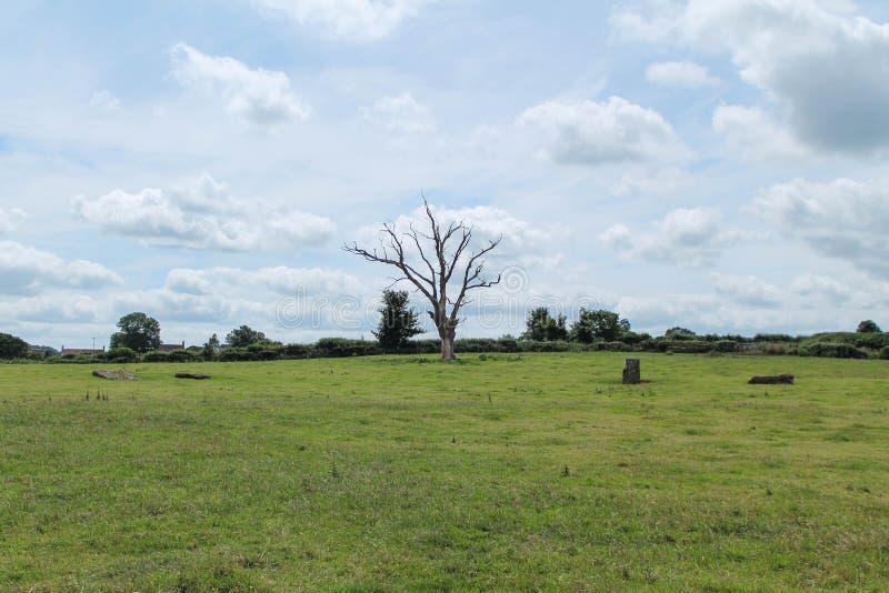 Der tote Baum lizenzfreies stockfoto