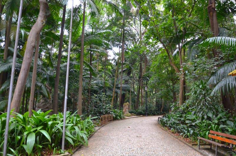 Der Trianon-Park auf der Paulista-Allee, Sao Paulo, Brasilien stockbilder