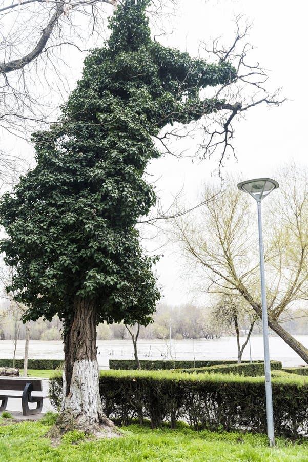 Der ungewöhnliche Baum stockfotos