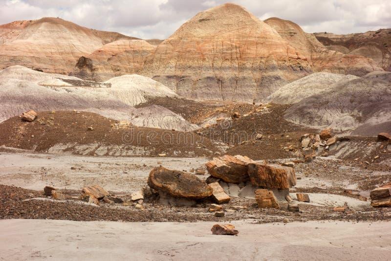 Der versteinerte Wald, wie in Arizona im springtim gesehen lizenzfreie stockfotos