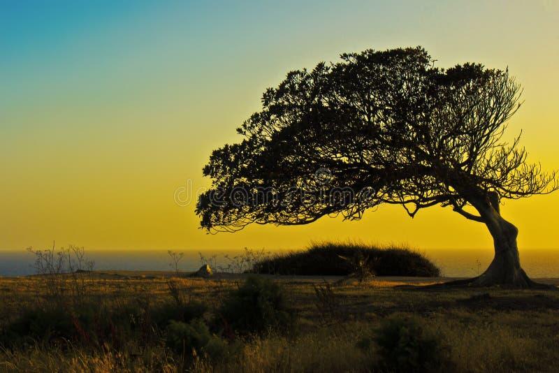 Der versunkene Baum lizenzfreies stockbild