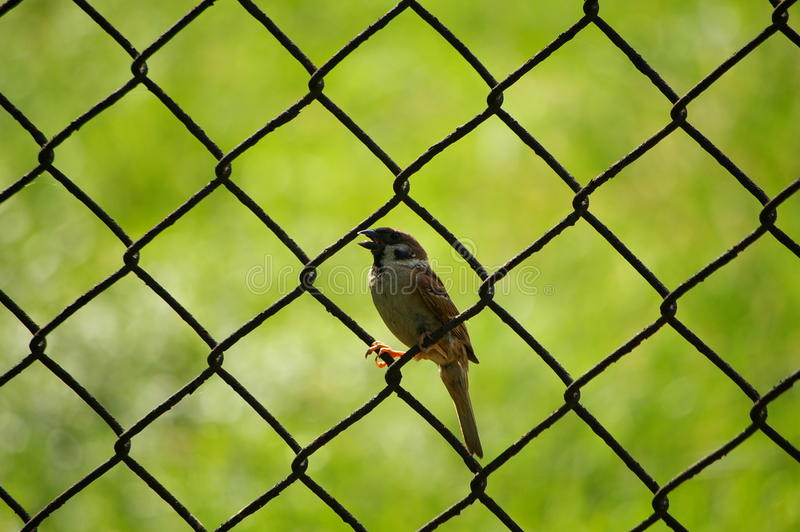 der Vogel stockfotografie