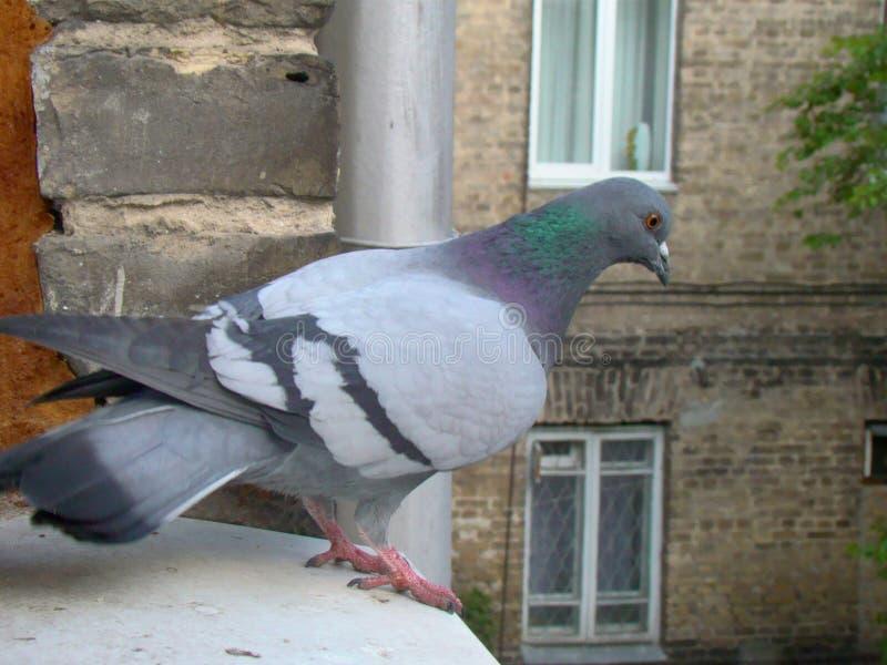 Der Vogel auf dem Fensterbrett lizenzfreie stockfotografie