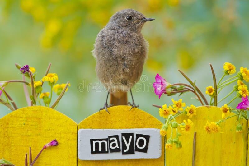 Der Vogel, der an einem Mai gehockt wurde, verzierte Zaun stockbild