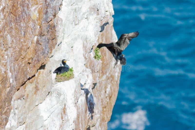 Der Vogel des Horns von Afrika lizenzfreie stockfotografie