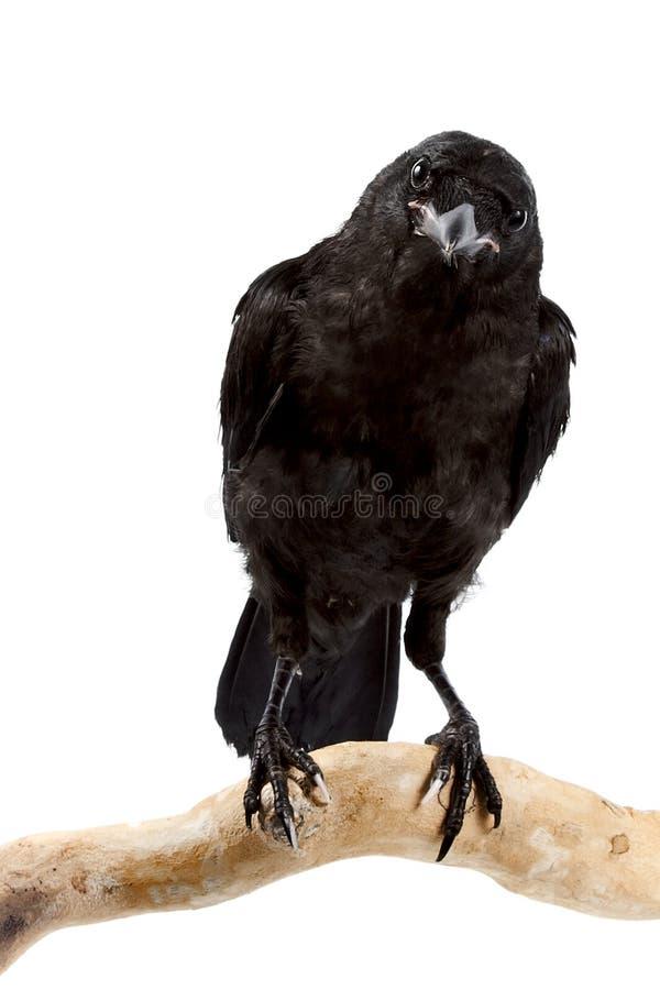 Der Vogel ein Turm lizenzfreie stockbilder