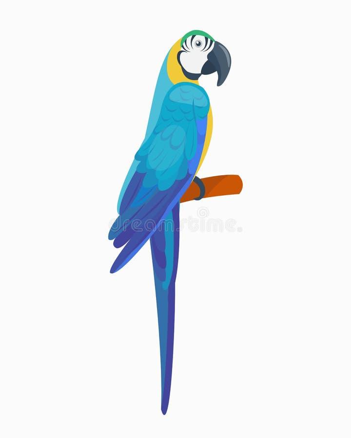 Der Vogelvektorillustrationswild lebenden tiere des wilden Tieres des Papageien der Karikatur tropische Federzoo-Farbnatur klar stock abbildung