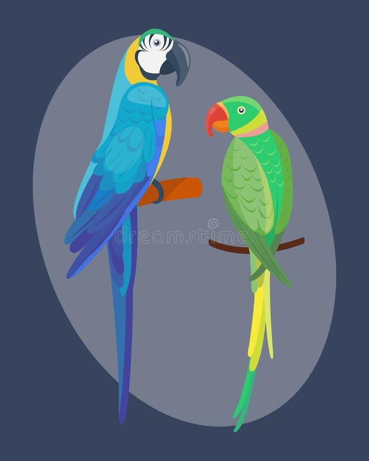 Der Vogelvektorillustrationswild lebenden tiere des wilden Tieres des Papageien der Karikatur tropische Federzoo-Farbnatur klar vektor abbildung