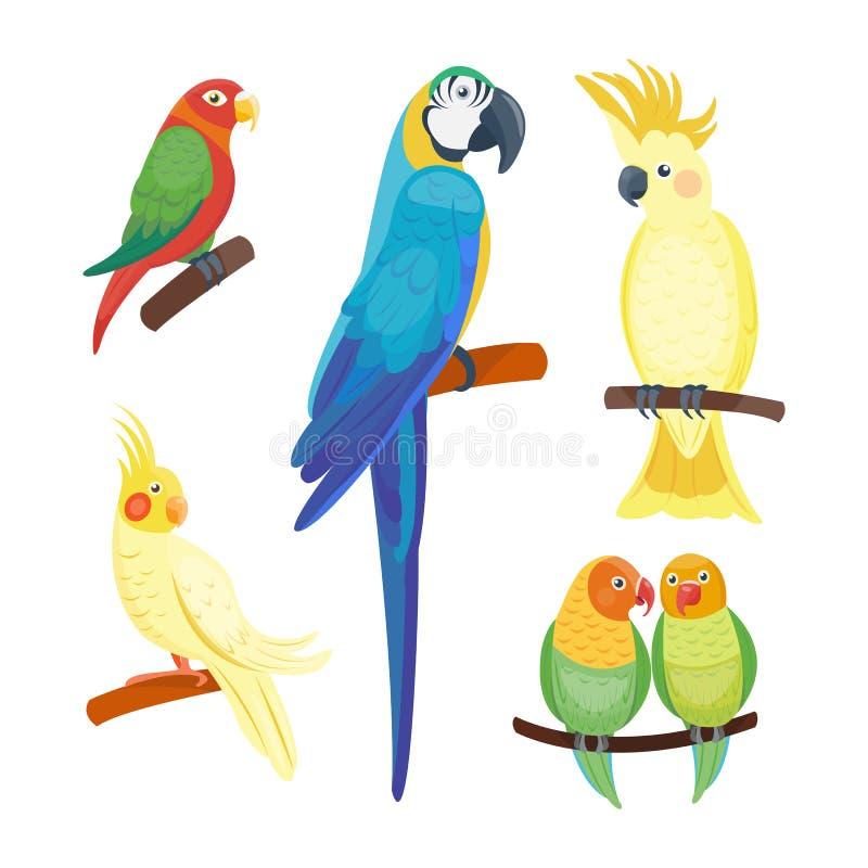 Der Vogelvektorillustrationswild lebenden tiere des wilden Tieres des Papageien der Karikatur tropische Federzoo-Farbnatur klar lizenzfreie abbildung