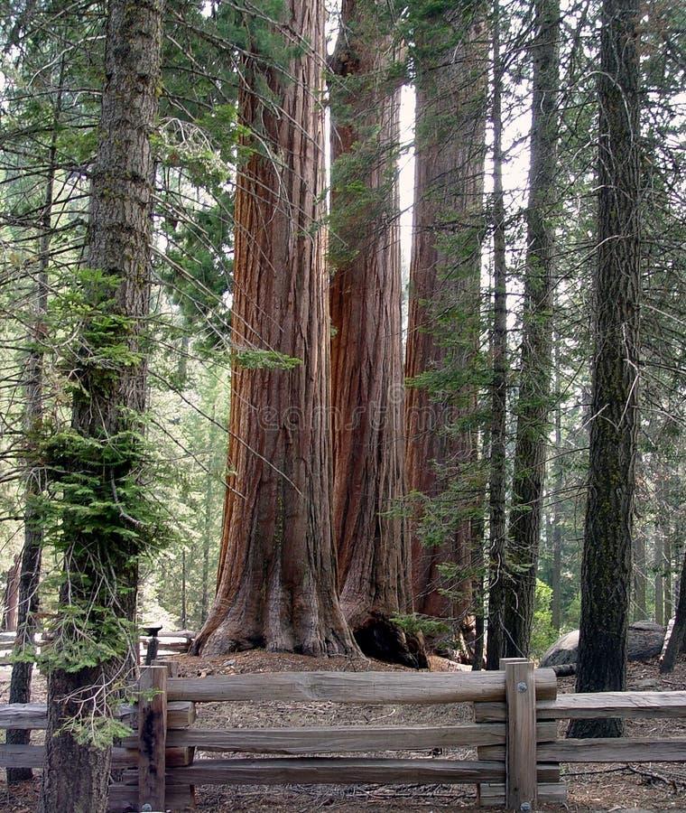 Der Wald lizenzfreie stockfotos