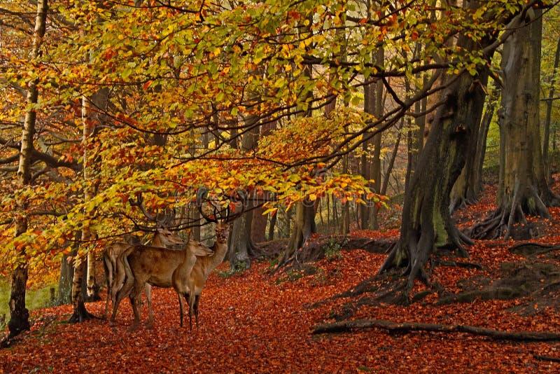 Der Wald im Herbst stockbilder