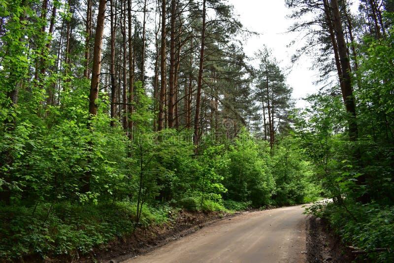 Der Wald nach dem Straßengrundsatz auf beiden Seiten wird mit Niederlassungen und Laub verziert lizenzfreie stockfotografie