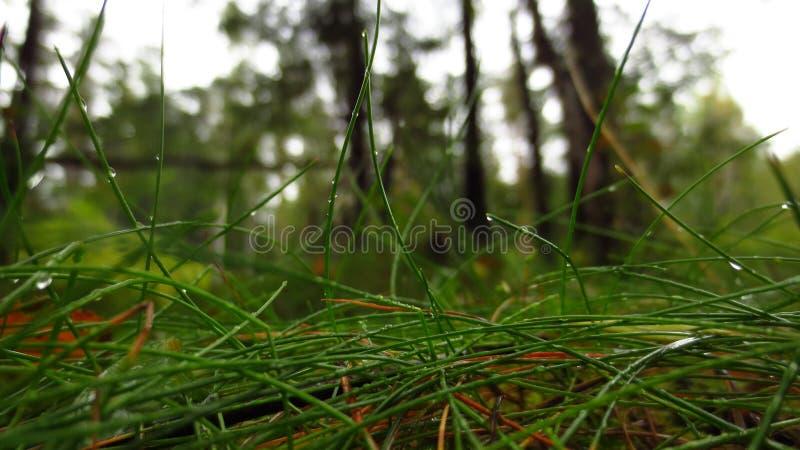Der Wald nach Regen lizenzfreie stockfotografie