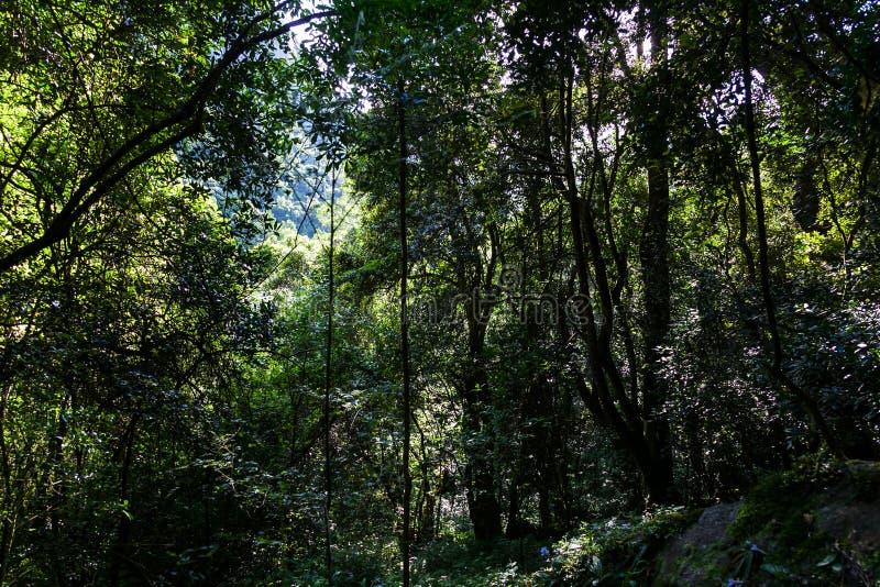 Der Wald nahe dem Madonna- und Kinderwasserfall, Hogsback stockbild