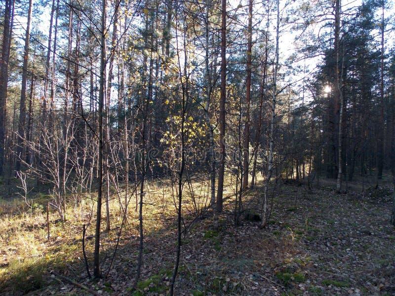 Der Weg des Lichtes im Wald stockbild