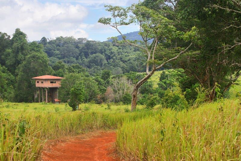 Der Weg wird durch Wiesen und Wälder in Richtung zu umgeben Chi-Observatoriumtierkoriander Khao Yai Nong Phak Nationalpark, Thail lizenzfreie stockfotografie