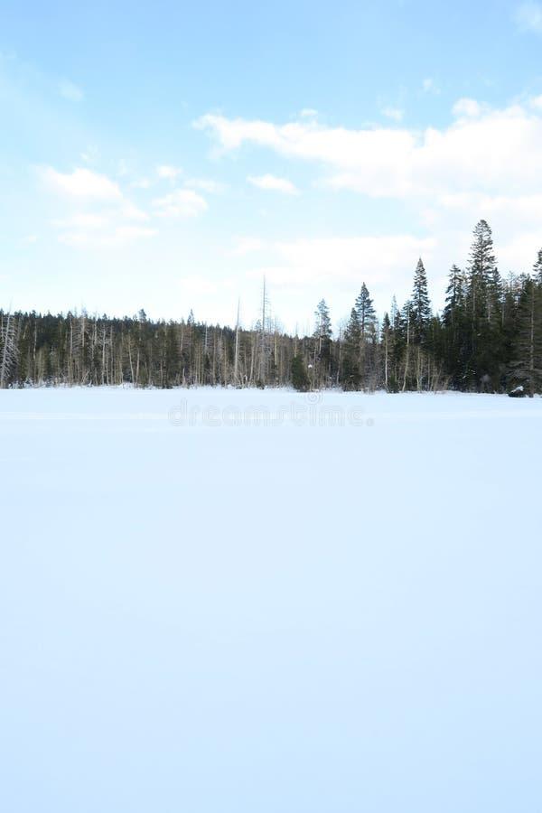 Der weiße Schnee in der einsamen Wiese stockfotos