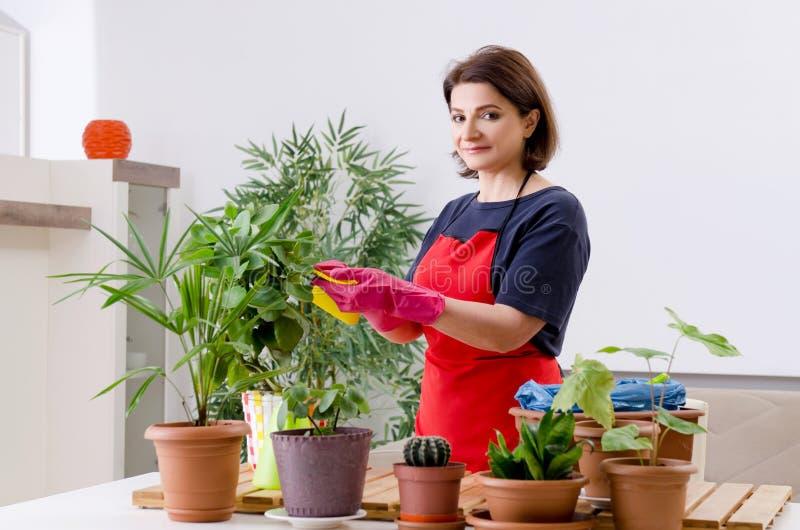 Der weibliche Gärtner mit Anlagen zuhause lizenzfreie stockfotos