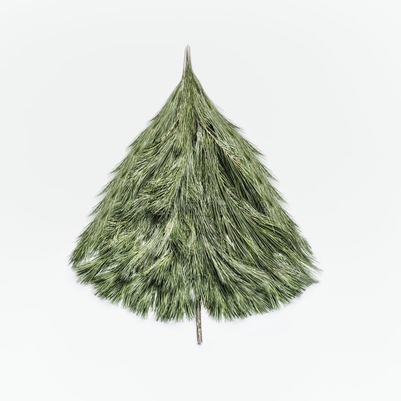 Der Weihnachtsbaum, der mit Zeder gemacht wird, verzweigt sich auf weißen Schreibtischhintergrund, Draufsicht Plan der Feiertagsg lizenzfreie stockfotografie
