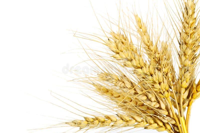 Der Weizen lizenzfreie stockfotos