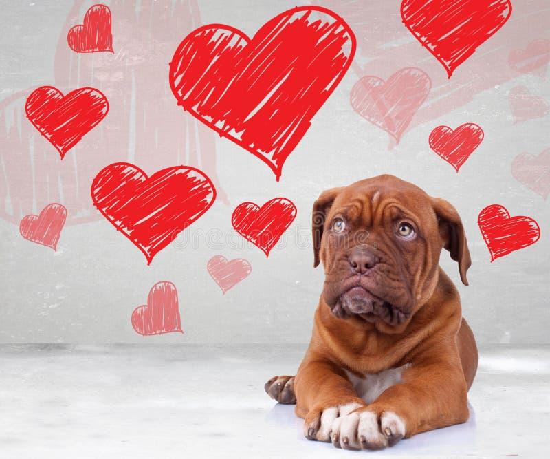 Der Welpe, der oben zum Herzen schaut, formt für Valentinstag lizenzfreies stockfoto