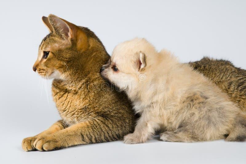 Der Welpe mit einer Katze stockfotos