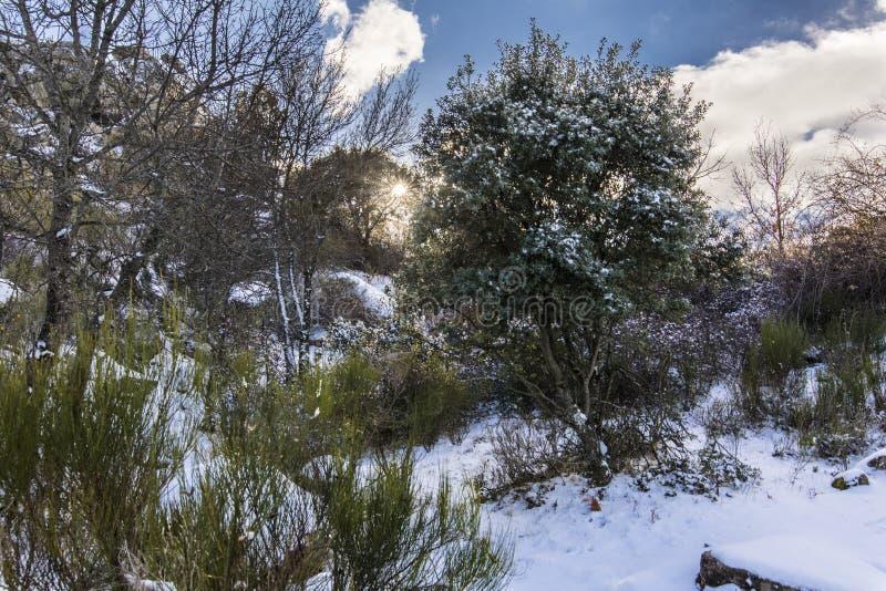 Der Winter kommt und die Schneedecken die Steigungen des ` Herreria-` Waldes an EL Escorial, Madrid, Spanien lizenzfreie stockfotos