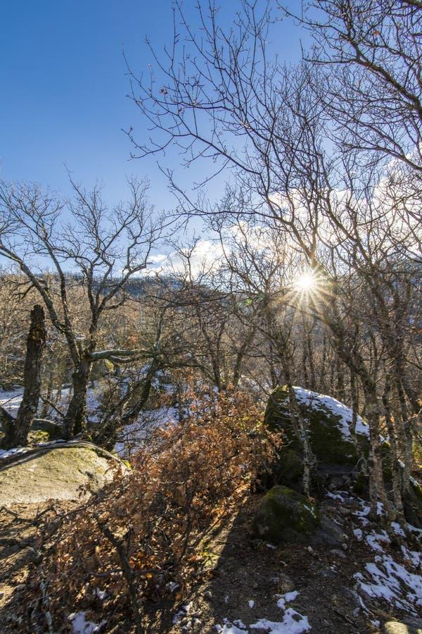 Der Winter kommt und die Schneedecken die Steigungen des ` Herreria-` Waldes an EL Escorial, Madrid, Spanien lizenzfreies stockfoto