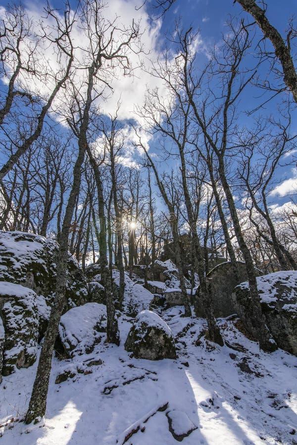 Der Winter kommt und die Schneedecken die Steigungen des ` Herreria-` Waldes an EL Escorial, Madrid, Spanien stockfotos