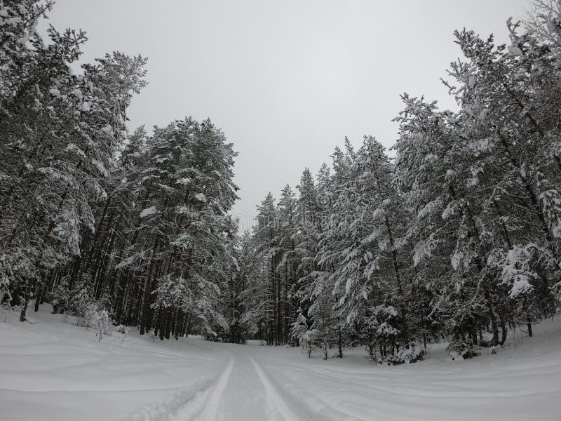 Der WinterWaldweg im Wald im Winter stockfoto