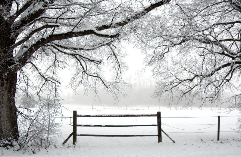 in der Winterzeit lizenzfreie stockfotos