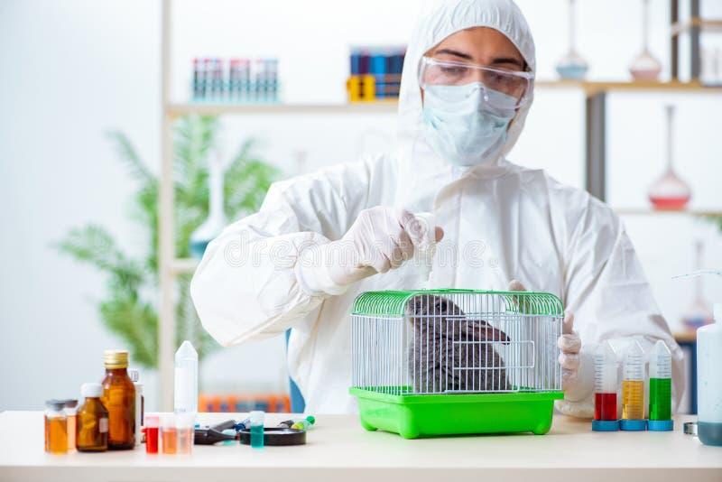 Der Wissenschaftler, der Prüfung auf Tierkaninchen tut stockbilder