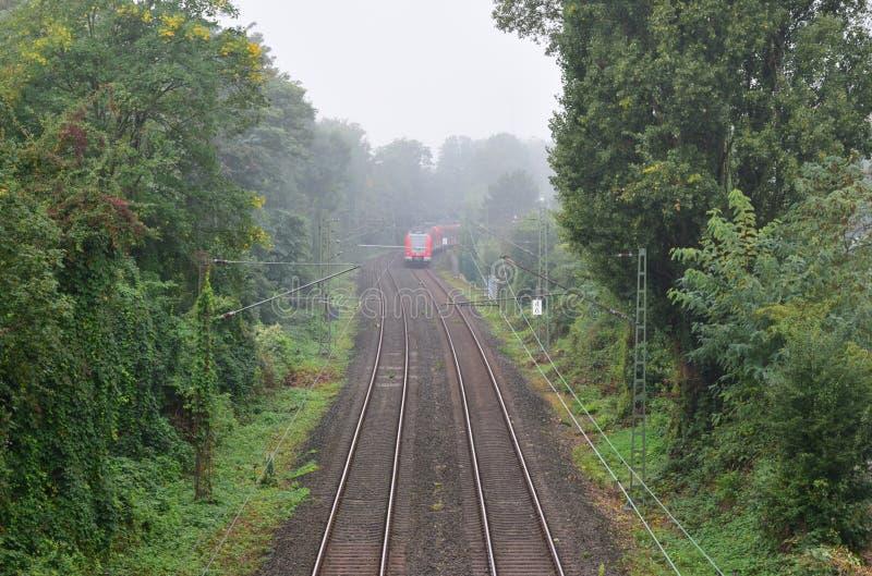 Der Zug auf der Eisenbahn im Wald lizenzfreie stockfotografie