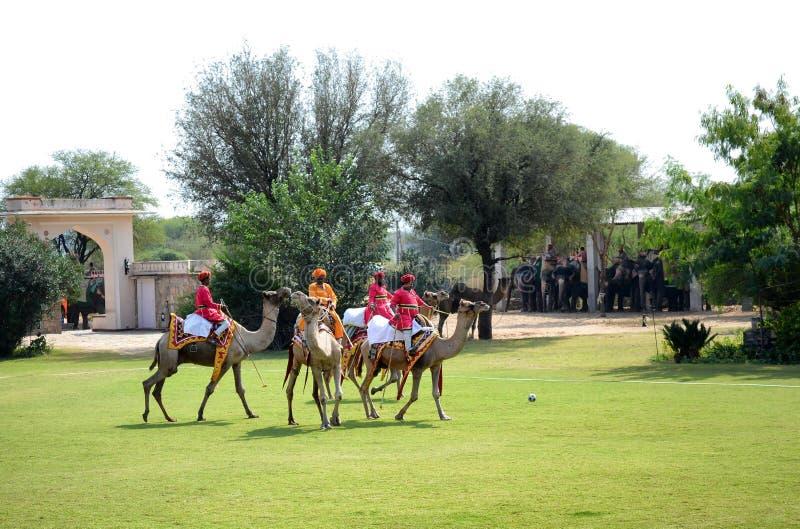 Dera Amer Elephant Safari Camel Polo arkivfoton