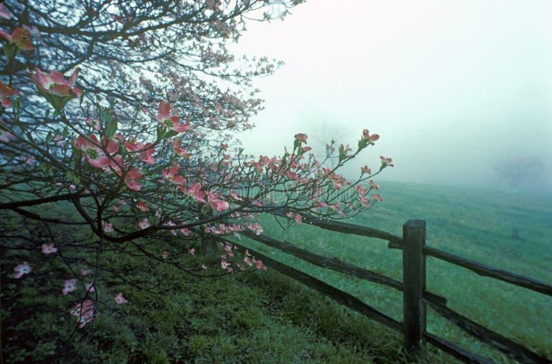 Derenie i rozłamu sztachetowy ogrodzenie w wiosny mgle, Monticello, Charlottesville, VA zdjęcie stock