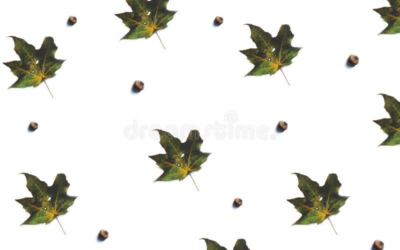 Derisione del fogliame di caduta su, modello con le foglie di acero e ghiande fotografia stock libera da diritti