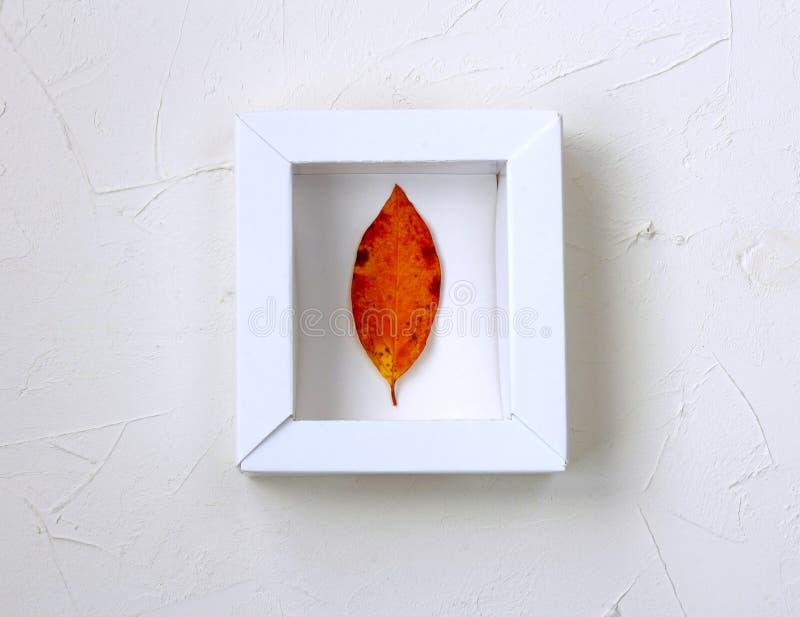 Derisione di autunno su, foglia nel telaio bianco fotografia stock