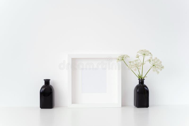 Derisione moderna della struttura del quadrato bianco su con un'erbaccia episcopale in vaso nero su fondo bianco Modello per la c fotografie stock libere da diritti