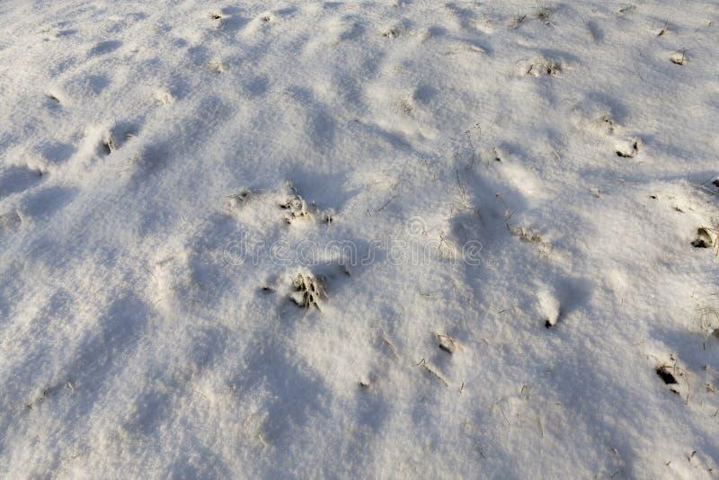 Derive della neve nell'inverno fotografie stock