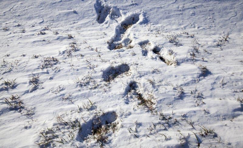 Derive della neve nell'inverno immagine stock libera da diritti