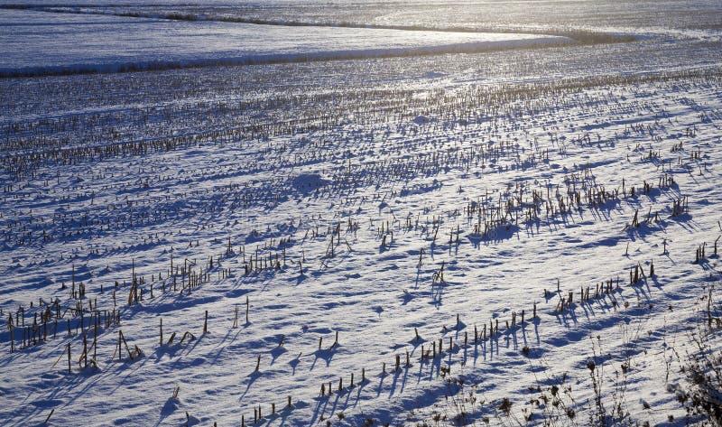 Derive della neve nell'inverno fotografia stock libera da diritti