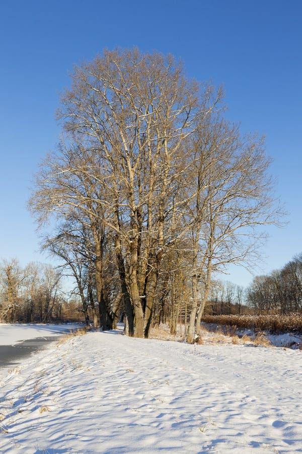 Derive della neve nell'inverno fotografie stock libere da diritti