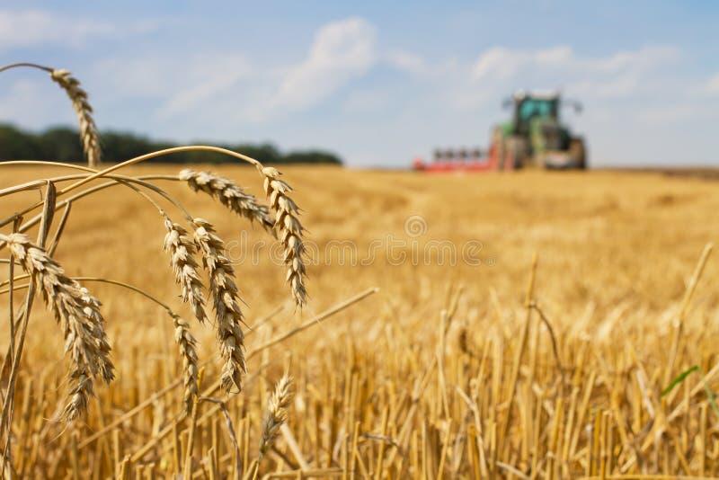 Dernières gouttes après la récolte et le tracteur labourant le gisement de chaume photo stock