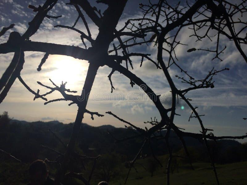 Derrière les arbres photographie stock libre de droits
