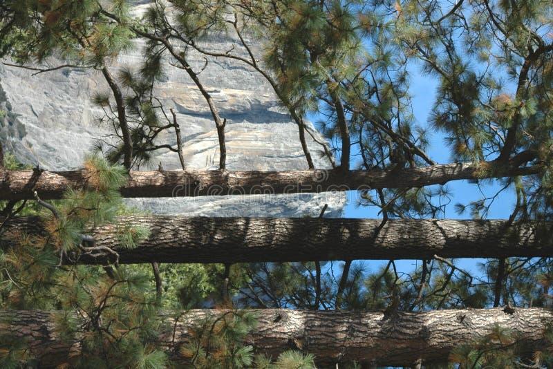 Derrière les arbres photos stock