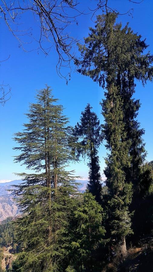 Derrière les arbres image stock