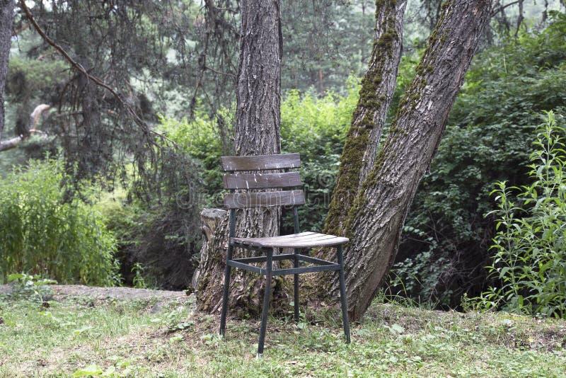 Derribo solo o triste en el jardín, parque con las sillas de madera imagenes de archivo